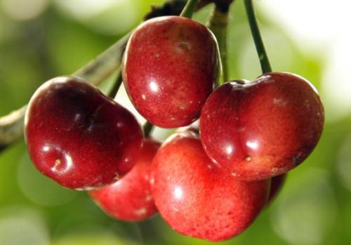 产后如何保养 吃荔枝和樱桃
